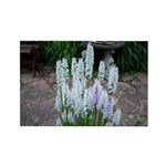 Hyacinth Rectangle Magnet (100 pack)