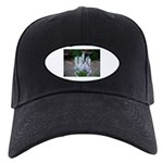 Hyacinth Black Cap