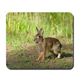 Funny Desert cottontail Mousepad