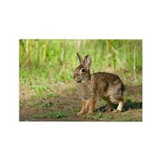 Desert cottontail Rectangle Magnet