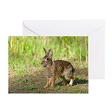 Cool Desert cottontail Greeting Card