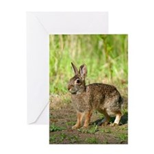 Unique Desert cottontail Greeting Card