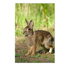 Cute Desert cottontail Postcards (Package of 8)