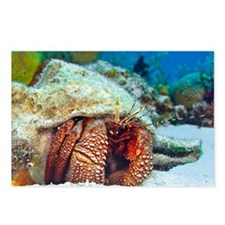 Cool Dive cozumel Postcards (Package of 8)