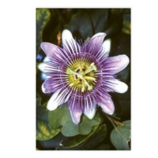 Croft Flower Postcards (Package of 8)