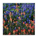 BLUEBONNETS AND PAINTBRUSH Tile Coaster