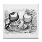 Norwich Cropper Pigeons Tile Coaster