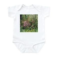 Adelaide Hills Wildflowers Infant Creeper