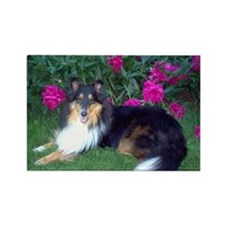 Peony Sheltie Rectangle Magnet