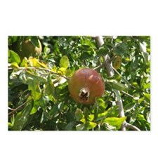 Pomegranite Tree Postcards (Package of 8)