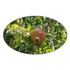 Pomegranite Tree Oval Decal