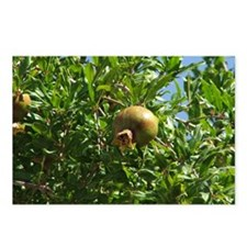 Pomegranite Early Fruit Postcards (Package of 8)