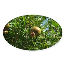 Pomegranite Early Fruit Oval Decal