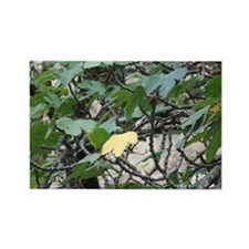 Fig Tree Rectangle Magnet