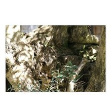 Olive gnarl Postcards (Package of 8)