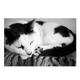 Black and White Shorthaired Cat Postcards (Package