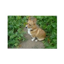 "Welsh Corgi ""In the Garden"" Rectangle Magnet"