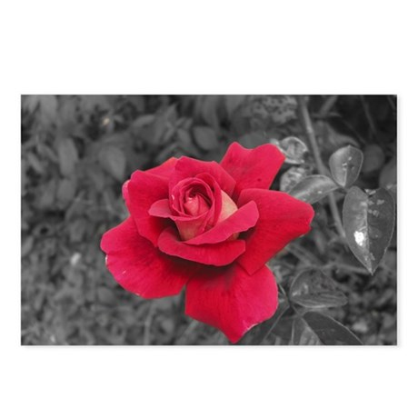 Black White Red Rose Postcards (Package of 8)