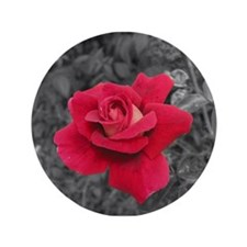 Black White Red Rose 3.5