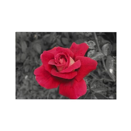 Black White Red Rose Rectangle Magnet