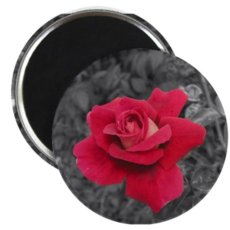 Black White Red Rose Magnet