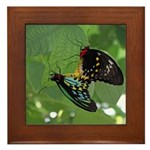 Butterflies Framed Tile