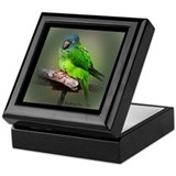BlueCrowned Conure Keepsake Box III