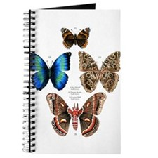 Butterflies and Moths Journal