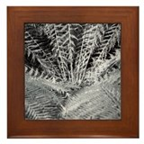 Silver Fern in the Otways Framed Tile
