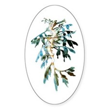 Leafy Sea Dragon Oval Decal