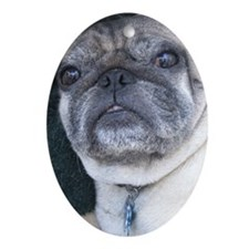 Chewie the Pug Oval Ornament