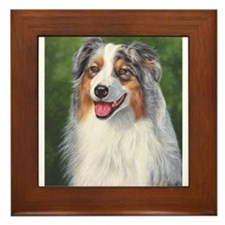 Blue Merle Australian Shepher Framed Tile