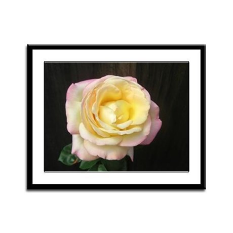 Peace Rose Framed Panel Print
