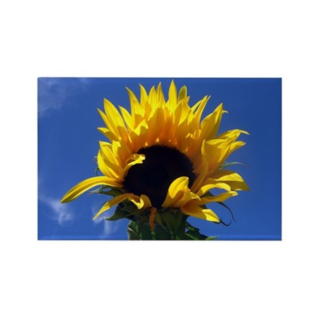 Sunflower Sunrise Rectangle Magnet