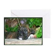 Boxer Puppies Greeting Cards (Pk of 20)