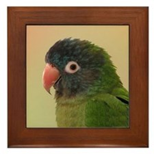 Blue Crowned Conure Framed Tile II