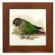 Greencheek Conure on Framed Tile