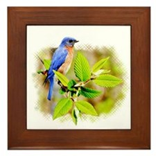 Eastern Bluebird Framed Tile