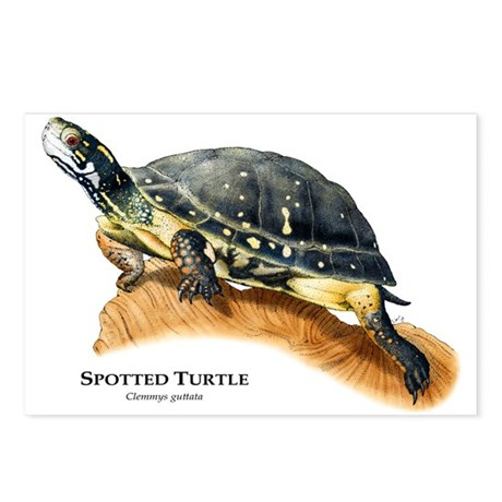 Spotted Turtle Postcards (Package of 8)