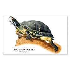 Spotted Turtle Decal