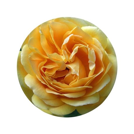"Yellow Rose 3.5"" Button"