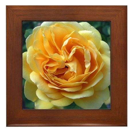 Yellow Rose Framed Tile