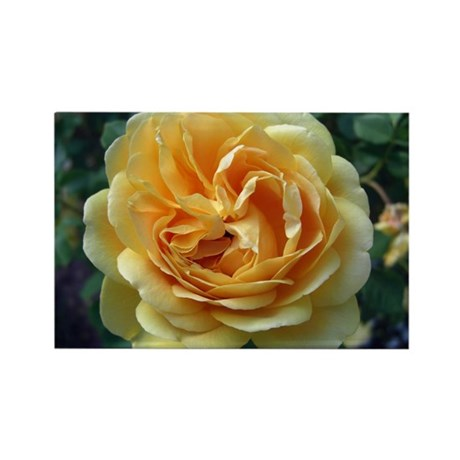 Yellow Rose Rectangle Magnet (100 pack)