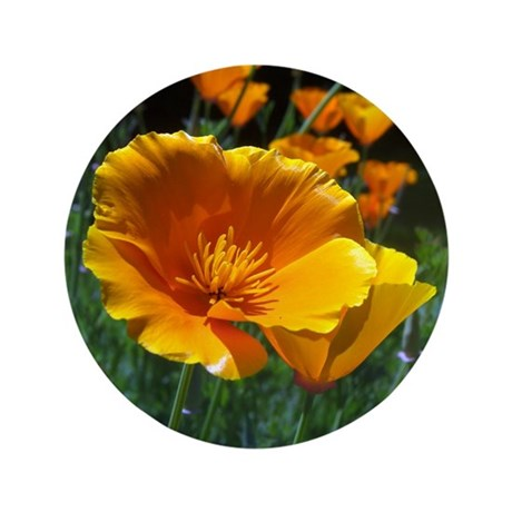 "Hello Poppies 3.5"" Button"