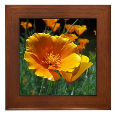 Hello Poppies Framed Tile