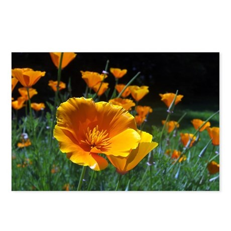 Hello Poppies Postcards (Package of 8)