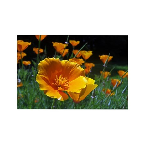Hello Poppies Rectangle Magnet (100 pack)