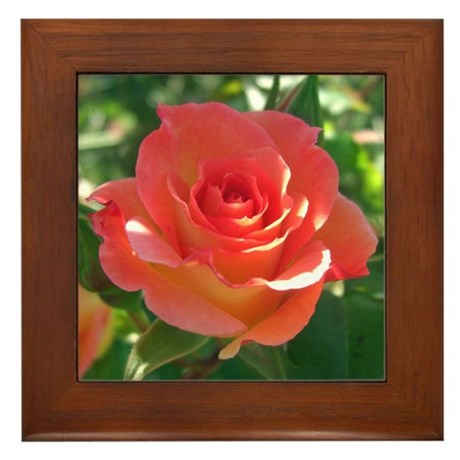 Rose Cup Framed Tile