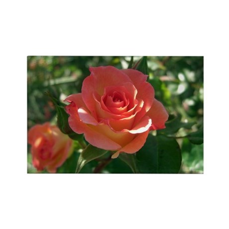 Rose Cup Rectangle Magnet