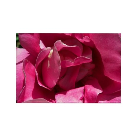 Pink Rose Close Rectangle Magnet (100 pack)